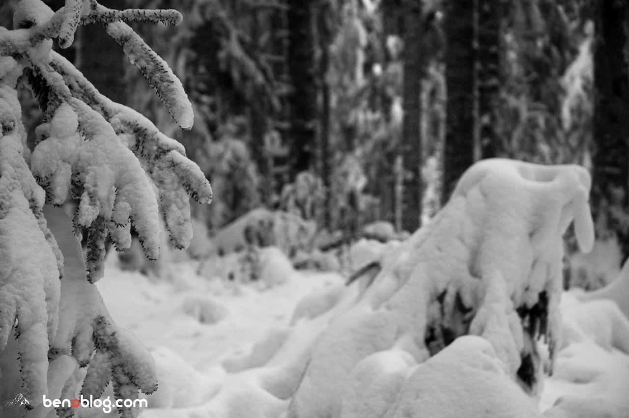 Montmija - bivouac et balade dans la forêt de Callong