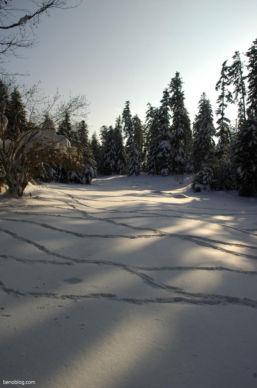 Balade luge plateau de Sault