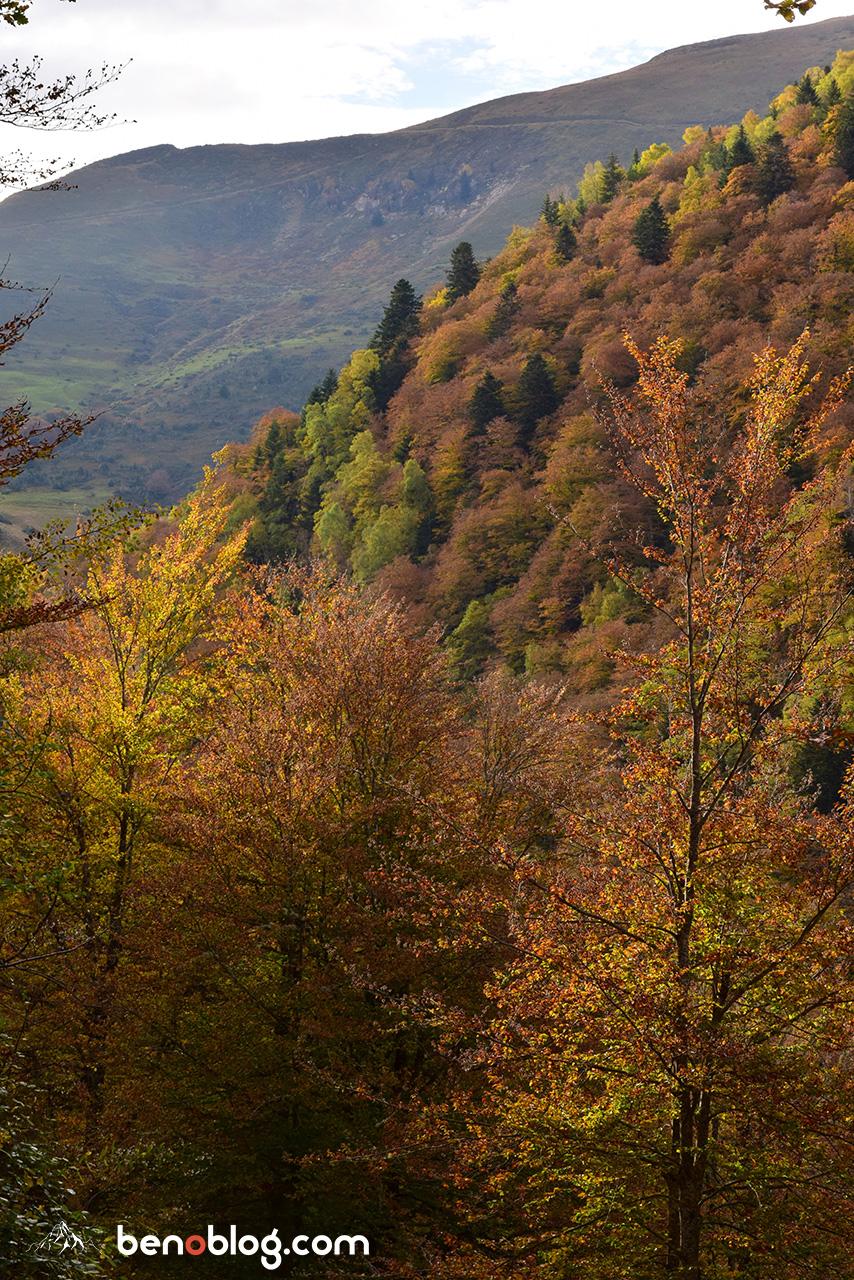 Forêts d'or